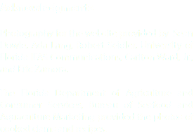 Acknowledgments Photography for the website provided by Sean Dowie, Ada Lang, Robert Seidler, University of Florida IFAS Communications, Carlton Ward, Jr., and Eric Zamora. The Florida Department of Agriculture and Consumer Services, Bureau of Seafood and Aquaculture Marketing provided the photos of cooked clams and recipes.